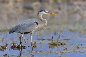 Central Florida's North Shore Birding Festival